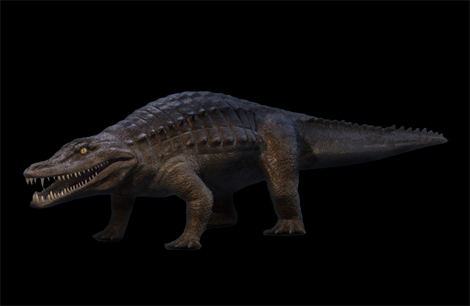 Brachychampsa Montana (early alligator)