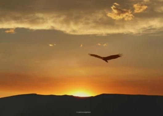 on-eagles-wings-joanna-jungjohann