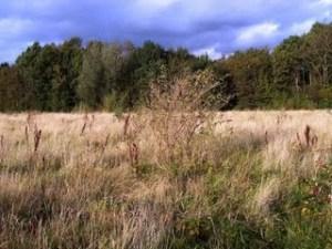 Meadow_Autumn
