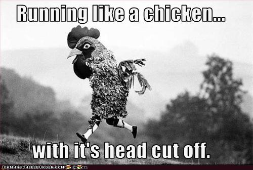 Image result for chickens with heads cut off meme