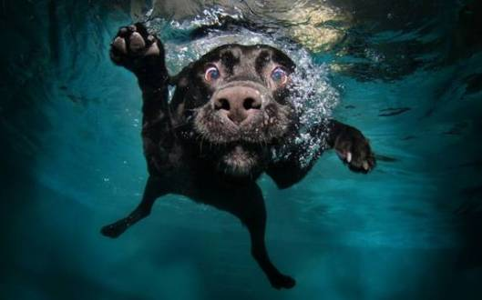 goofy-dog-underwater