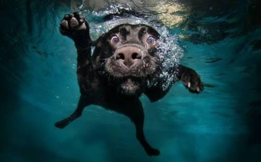 goofy-dog-underwater
