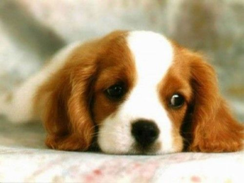 1-sad-pup_1