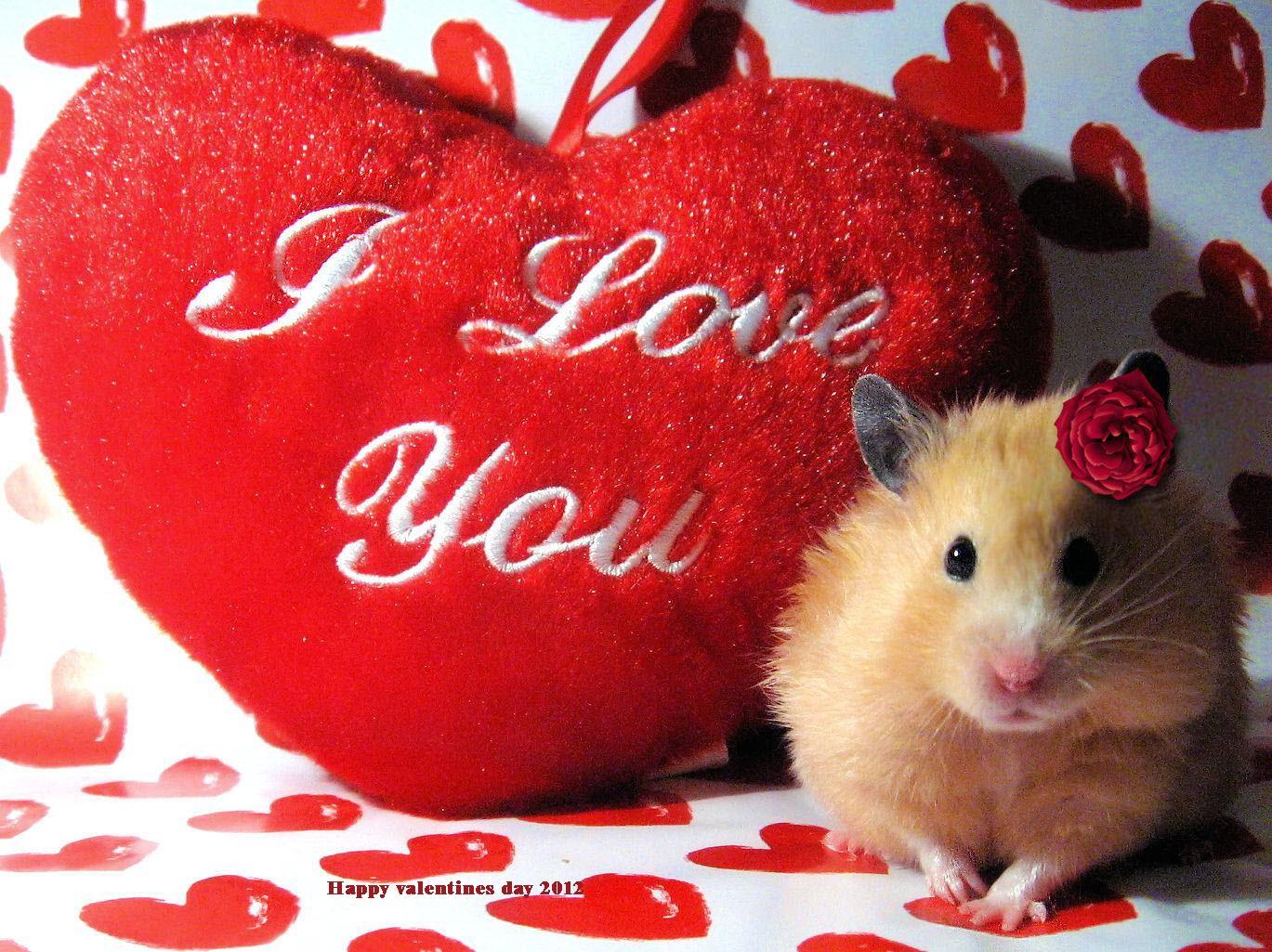 Happy valentines day i love you so much valentines day info happy valentines day i love you so much kristyandbryce Gallery