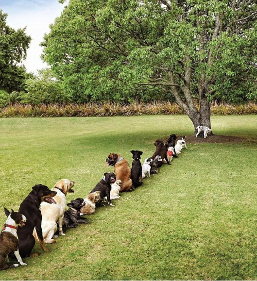 dogs-waiting-in-line-to-pee11
